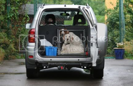 Transporting pets safely